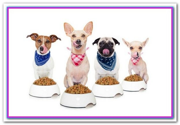 Best Affordable Dog Food Philippines Dog Food Brands Grain Free
