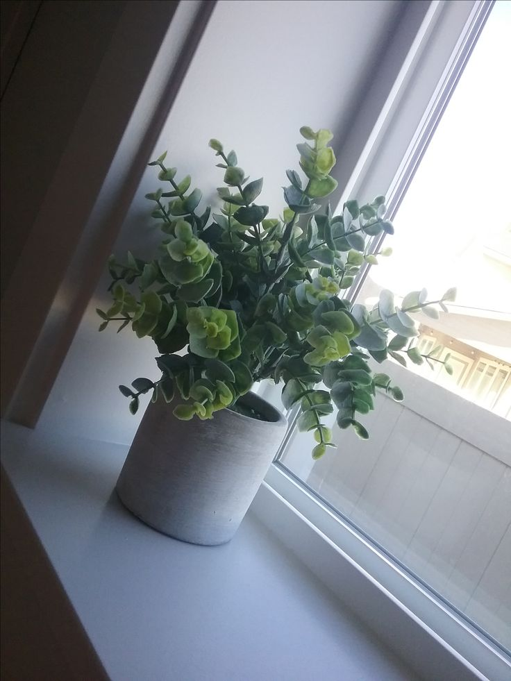 Faux plant from TJ-Max