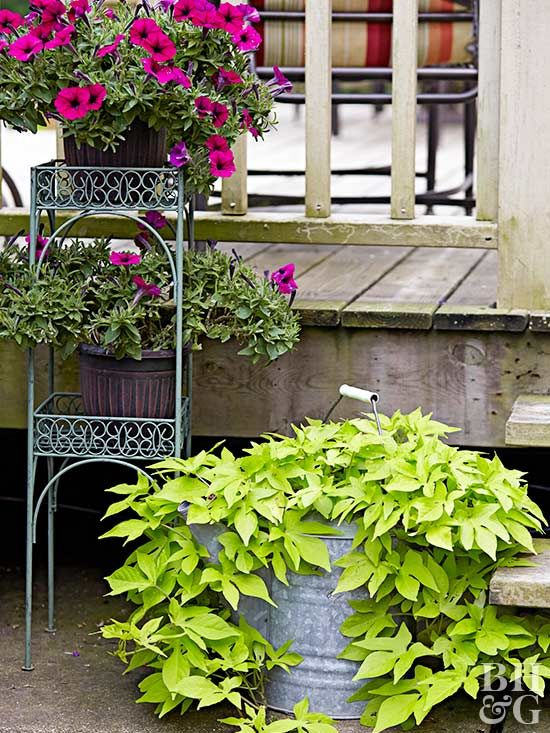 Looking for container plants that will look good even if you forget about them? Wave petunias, verbena, and sweet potato vine are just a few of the annuals that will look good even if you forget to water them. #containerannuals #containergardens #gardening