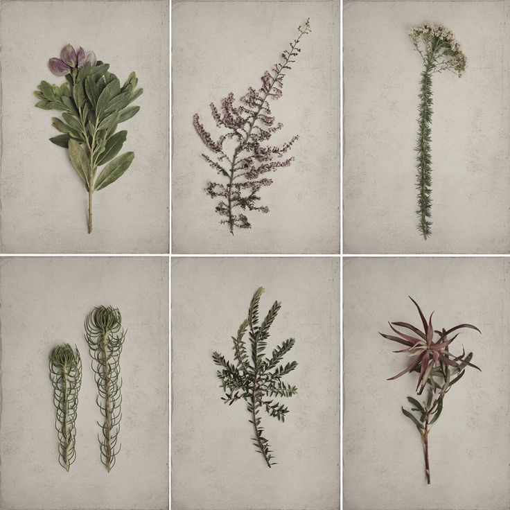Botanical print series