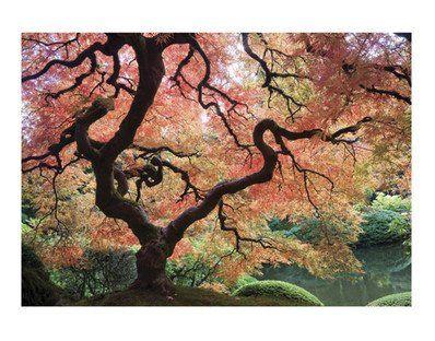 """Fotomurale - con colla No.85 """"JAPANESE GARDEN"""" 400x280cm wallpaper, carta da parati, bosco, albero, autunno, giardino, Giappone, colorato, n..."""
