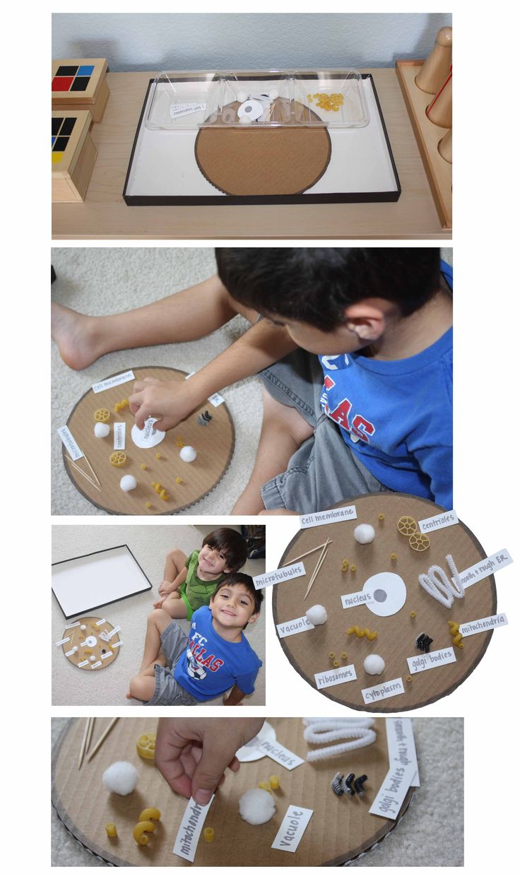 Montessori inspired animal cell tray - This might be a bit advanced for kindergarten - but it would be a great way to talk about how plants and animal cells are broken down into little parts - and just introduce them to the idea with this tray of materials. Just letting the children be introduced to concepts encourages their minds to think harder and their brains to grow :)