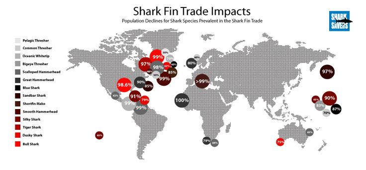 Shark fin option trade