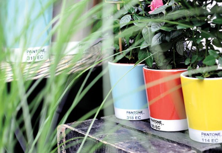 Pantone in the garden, absolute perfection!