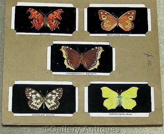 Vintage British Butterflies full set Series of 25 Cigarette Cards in Wills Album by Abdulla and Co Ltd Issued in 1935 #followvintage