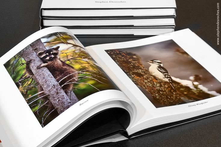 reviews with blurb shot books