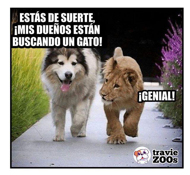 Total Donde Cabe Una Mascota Caben Dos Dog Perros Cat Gato Animales Leon Perros Graciosos Memes De Animales Divertidos Chistes De Perros