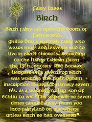 Fairy Tree - Birch