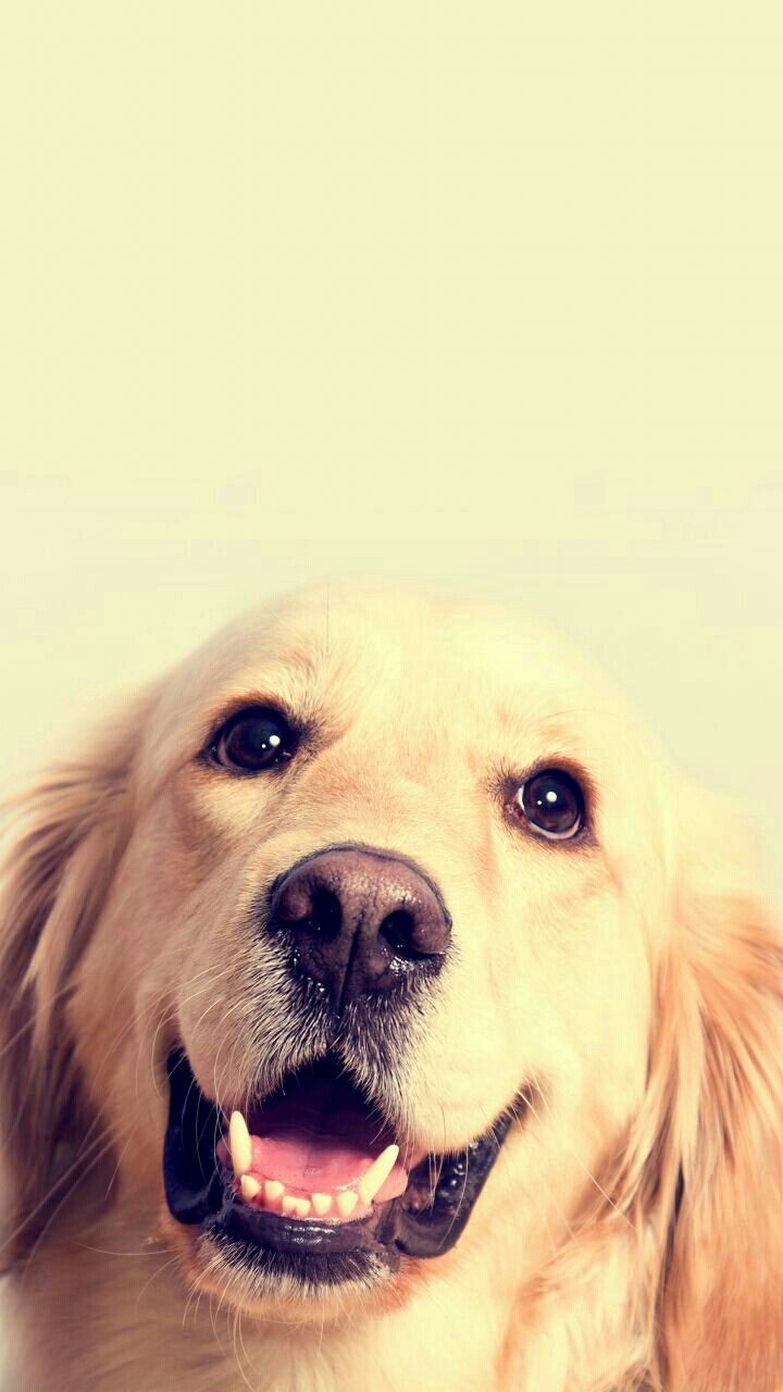 Dog Wallpapers Are Added Beautiful And Cute Dogs For Your Mobile Phone Follow Us On Facebook For More Beautiful Cute Dogs Dog Wallpaper Cute Puppy Wallpaper