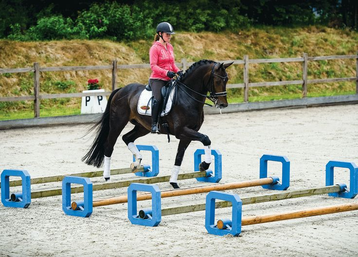 25+ best ideas about Horse and rider on Pinterest ...