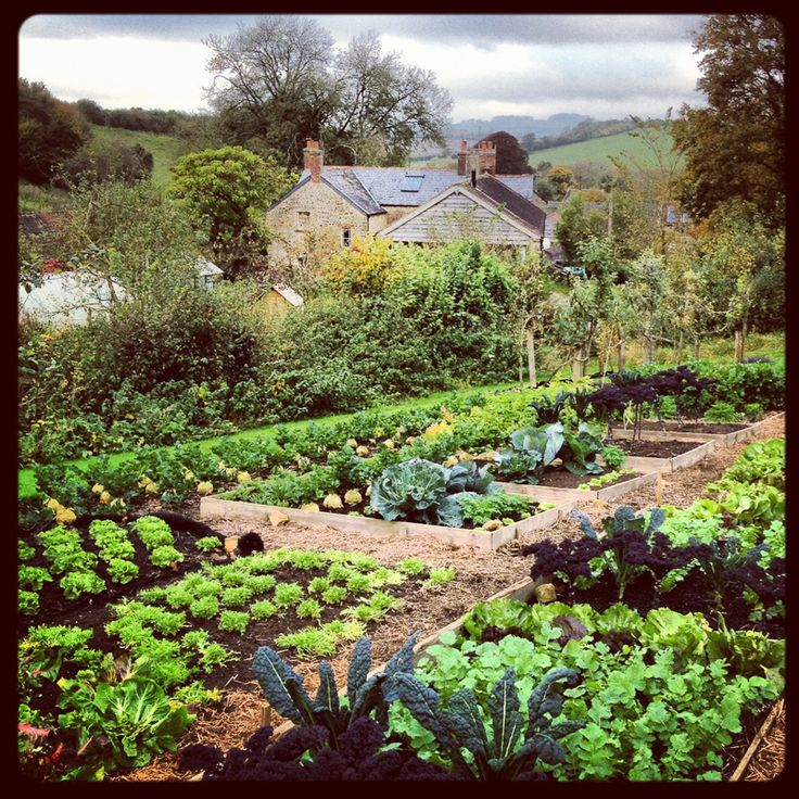 Charles dowding s vegetable plot by jason ingram huertos for Jardin 00 garden