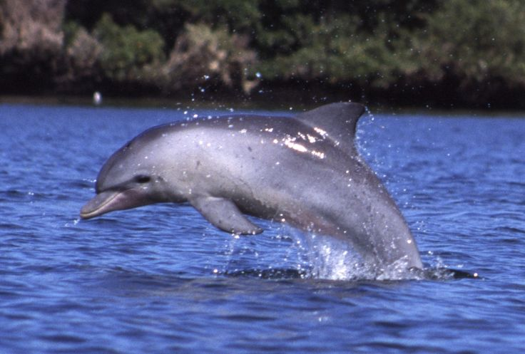 The National Aquarium has recently announced that it will be releasing all eight of its bottlenose dolphins to a seaside sanctuary. Now these dolphins will be able to swim in the sea, feel the tides, and interact with wild dolphins. Sign this petition and thank the National Aquarium for making the compassionate decision.