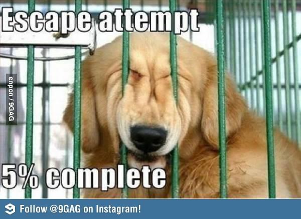 Escape dog attempt 5% complete