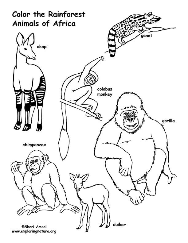 African Rainforest Animals Coloring Page Animal Coloring Pages African Animals Coloring Pages