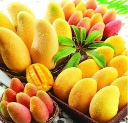 African Mango extract has been one of the latest supplements to explode onto the diet pill market. African Mango is different for many manufactured...