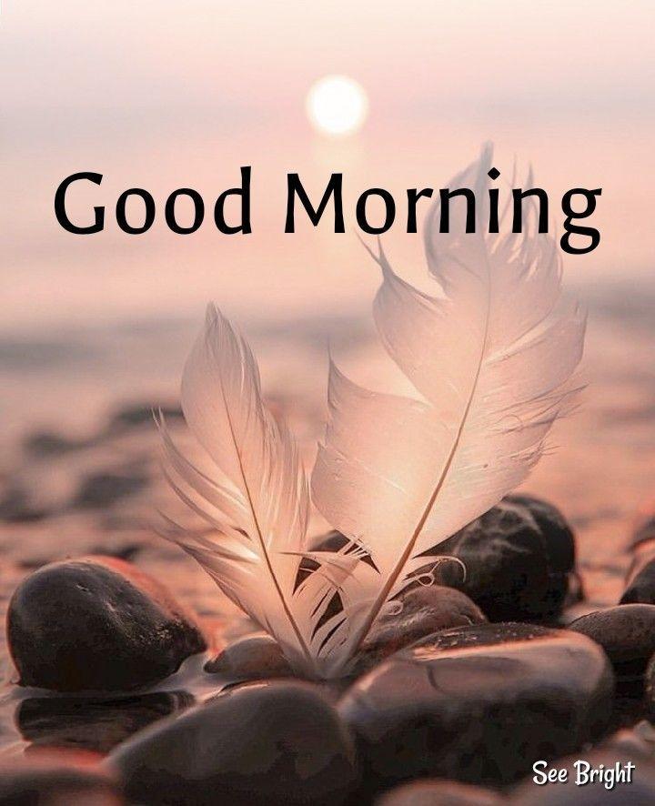 18 Good Morning Memes Videos 18 Morning Memes Good Morning Nature Good Morning Images Hd