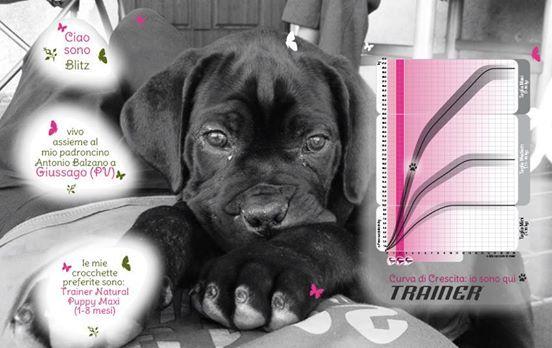 Ciao, sono Blitz. Vivo insieme ai miei padroncini da quando avevo 50 giorni, adesso ho 4 mesi e cresco forte e in salute grazie a Trainer Natural Puppy Maxi. Vivo all'esterno con un altro cagnolino, ma appena vedo qualcuno gli corro incontro in cerca di coccole! Un saluto a tutti.