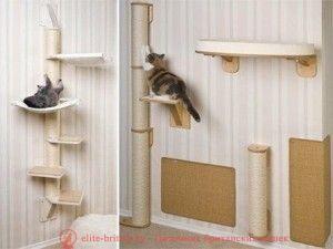 Когтеточки для кошек и котов