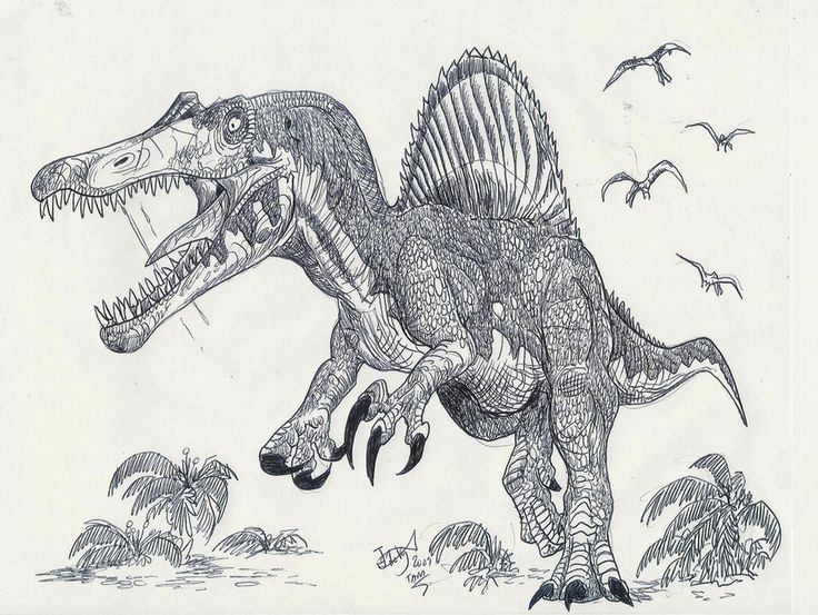 45 best images about art  spinosaurus on pinterest