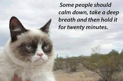 [Image: c7fdfeb86c6e6b98de459c9a3ce2742c--grumpy...-kitty.jpg]