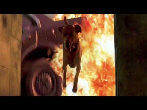 A supercut of dogs triumphantly surviving in disaster movies (in which most humans are killed)