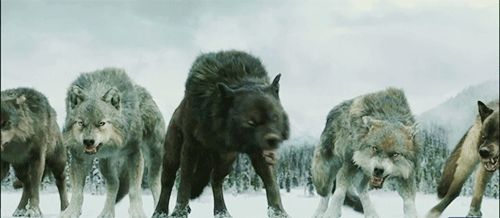 From left: Alex, Lucas, Ace and Skylar. I don't know the last wolf - it SHOULD be Cody, but that's not how I imagined him.