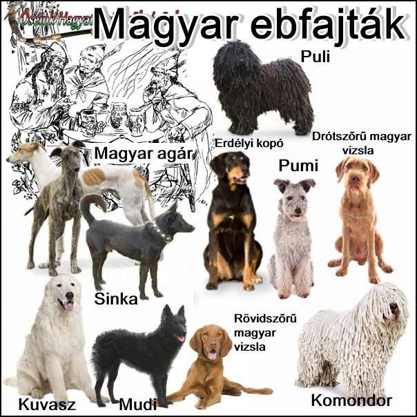 magyar kutyafajták
