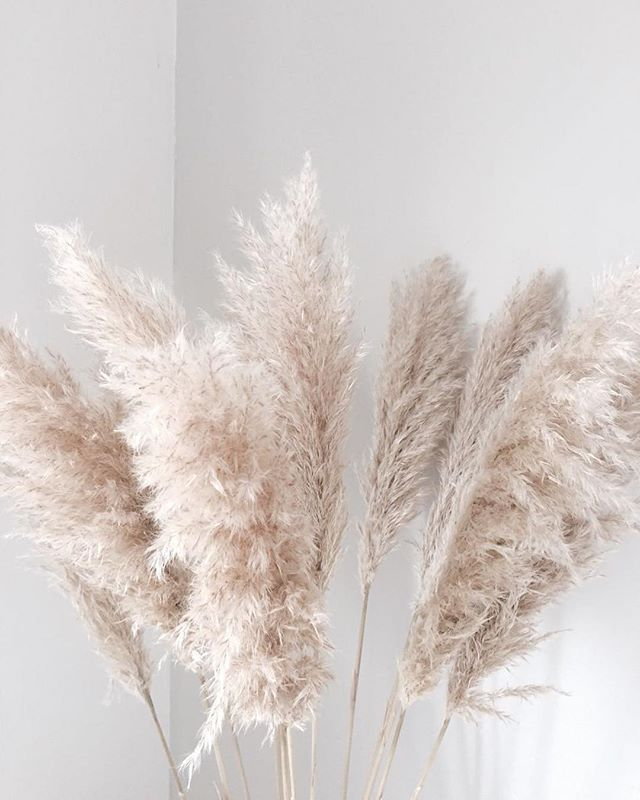 @studiogabrielleuk We love using Pampus Grass when styling a space. It grows wildly as an ethereal sea of feathery foliage. These extraordinary grasses sway and cascade to their own otherworldly tune. ⠀⠀ ⠀⠀ We work with specialist florists based in the UK to create various visual blooms, in both editorial and residential projects - an incredible backdrop of pampas grass plumes arranged in larger than life fan formations, an overhead canopy, an enclosed circle or as giant clusters spilling…