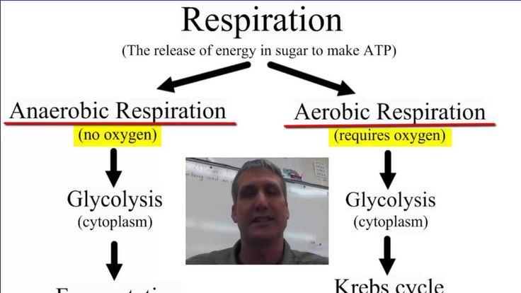 Anaerobic vs Aerobic Respiration
