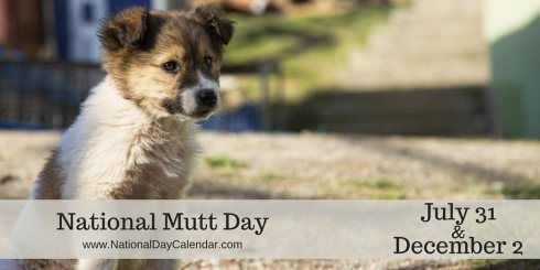 National Mutt Day - July 31 and December 2