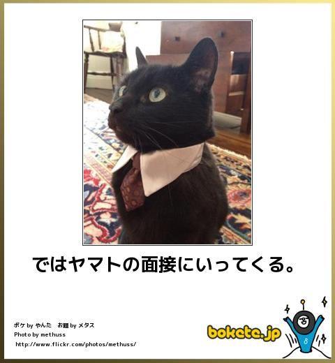 46187: 猫に関するbokete(ボケて)まとめ : 〓 ねこメモ 〓