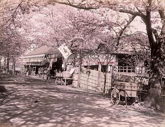 Tea Houses: Tokyo, Japan 1890   Photographium   Historic Photo Archive 向島の桜