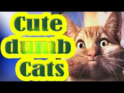 Best Cat fail video: Funny and cute cats compilation with a touch of dumb in them – Best Funny Cat Videos #catvideo #catvideos #cats