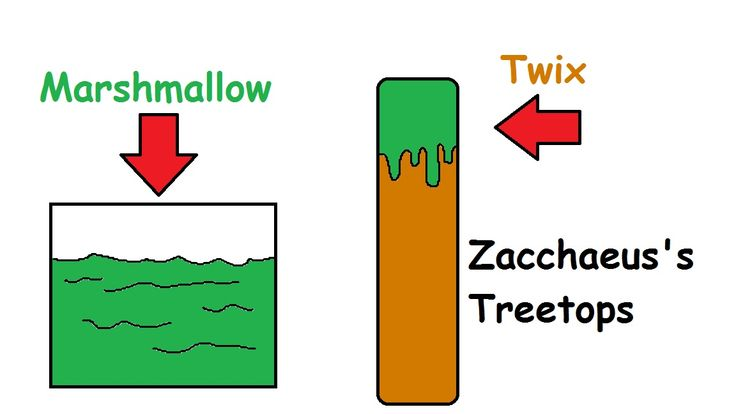 Zacchaeus Treetops
