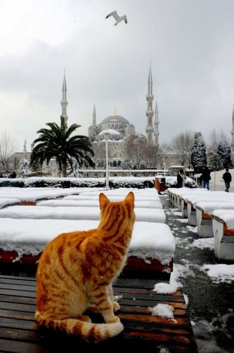 "(Winter in Istanbul) * * "" QUITE A PALACIAL ESTATE OVER DER. WATCH DAT BIRD CRAP ON IT."""