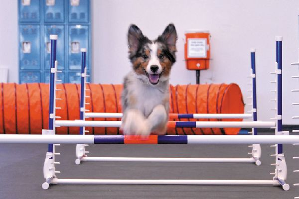Zoom Room Is An Indoor Gym For Dogs Https Ift Tt 2w2vznr Dog