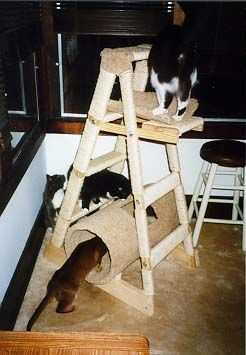 "cat ladder ""It's made from a four foot tall step ladder and used 500 feet of 1/4"" sisal rope. The carpeted pieces are parts of a 12"" diameter cardboard concrete mold...  and if I do this again, I'll just do rope. We put two by fours across the bottom to anchor it more securely."""