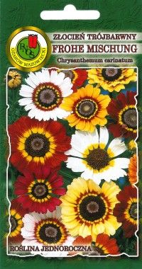 złocień trójbarwny - Nasiona kwiatów - nasiona PNOS Ożarów