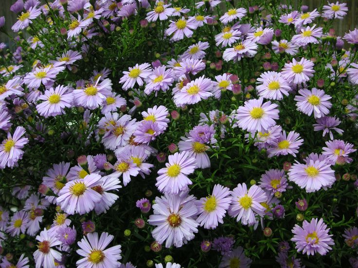 That Bloomin' Garden-Planning the Fall Flower Garden