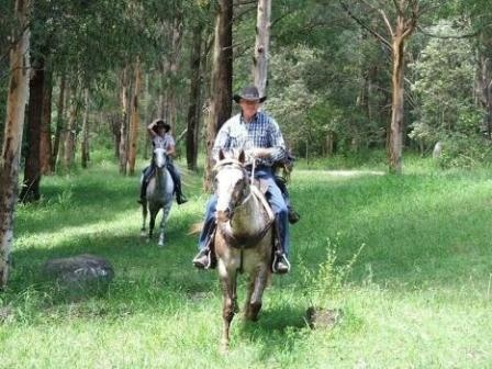 Tamborine Mountain Trail Rides