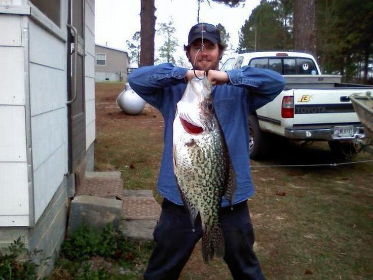 Below is the world record crappie caught by anglers just for Crappie fishing in missouri