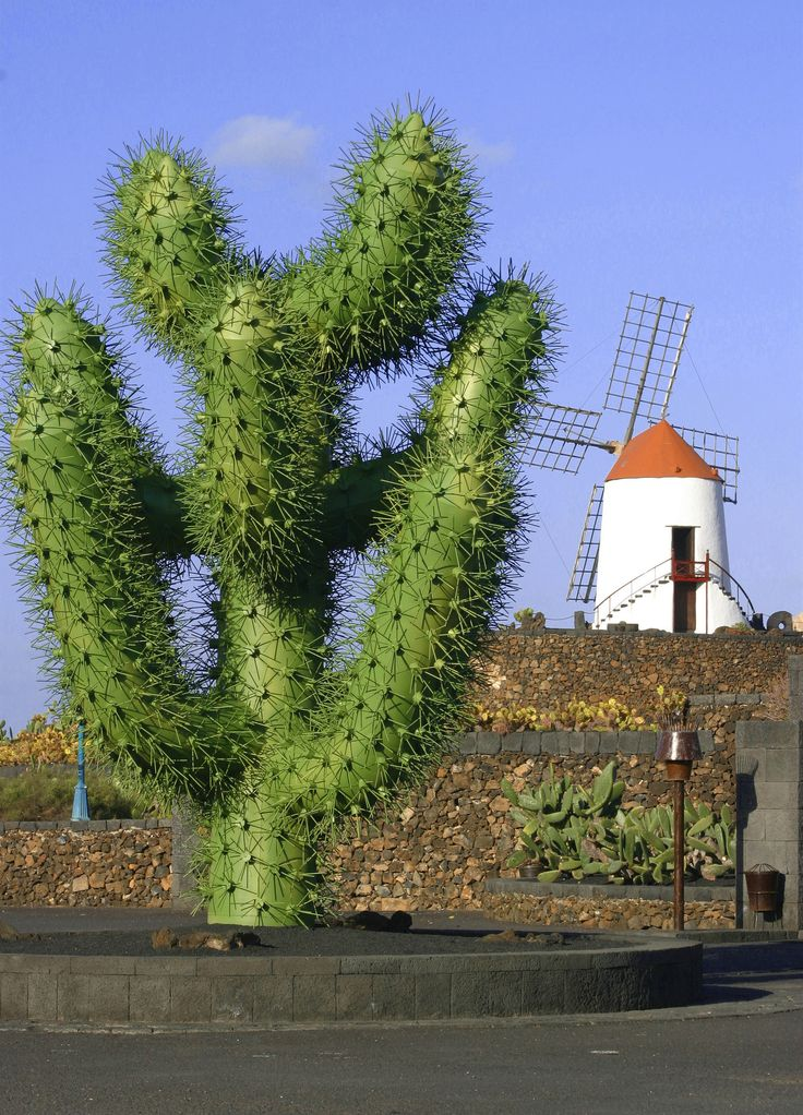 Jardin de Cactus. César Manrique. Lanzarote. Spain