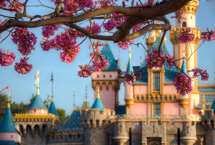The Castle in Bloom