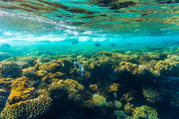 sea coral reef with hard corals fishes underwater photo