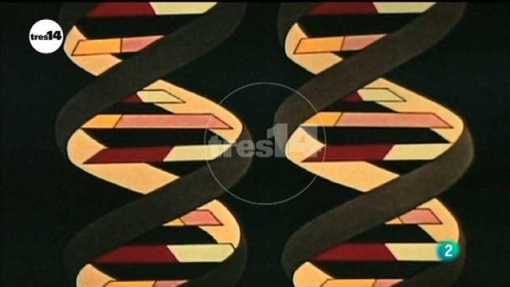 Herencia genética - tres14 - RTVE.es