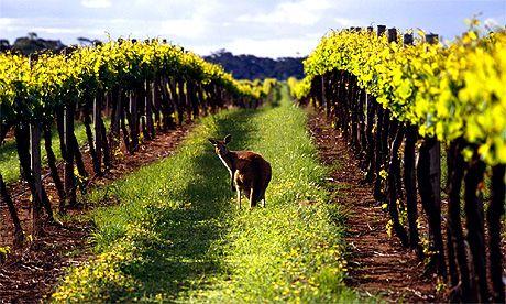 Découvrez les plus grand vins d'Australie en France - vins d'Australie | ESTATE SELECTION