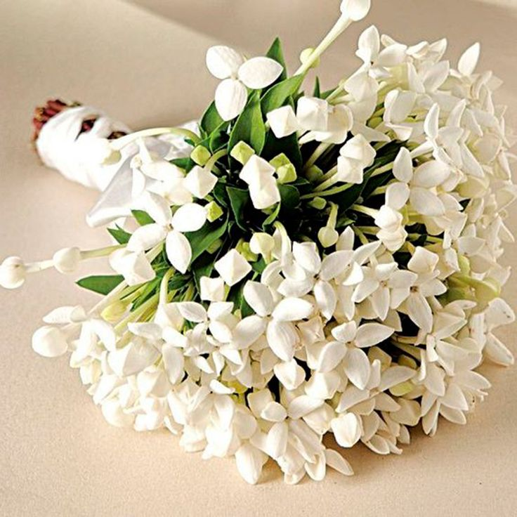 ramo de flor de azahar