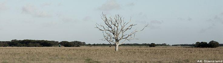 Foto: AK Stensland, Et tre langs Garden Route, Sør-Afrika