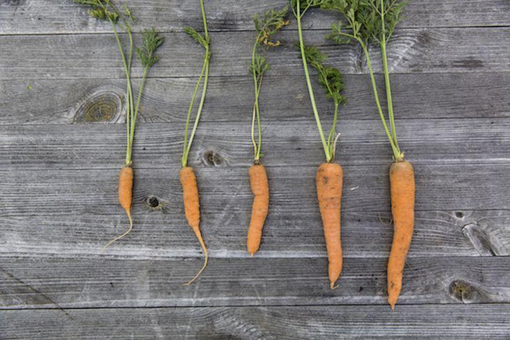 Fermented Carrots