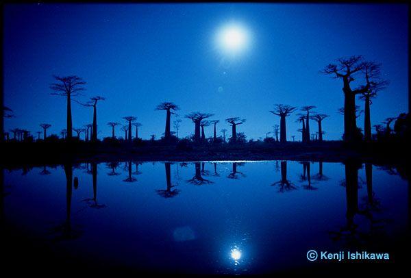 湖に映るバオバブ(マダガスカル・ムルンダバ/2005年)